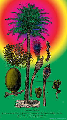 Magic Kingdom Digital Art - Date Palm by Eric Edelman