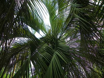 Photograph - Date Palm by Sheri McLeroy