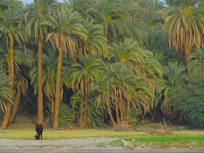 Exploramum Photograph - Date Palms Along The Nile by Exploramum Exploramum