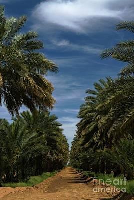Photograph - Dateland Arizona by Bob Pardue