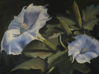 Datura Painting - Datura by Constance GEHRING