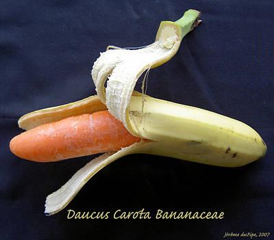 Absurdity Photograph - Daucus Carota Bananaceae by Dirk Laureyssens
