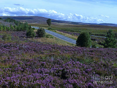 Photograph - Dava Moor, Moray by Phil Banks