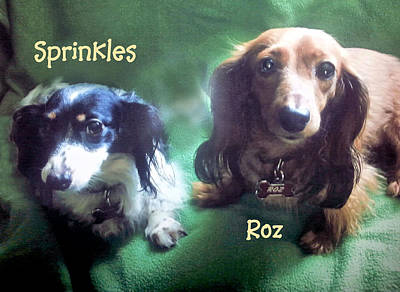 Photograph - Dave's Roz And Sprinkles by William Stewart