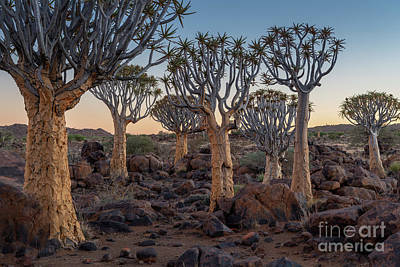 Photograph - Dawn And Quiver Trees-namibia by Sandra Bronstein