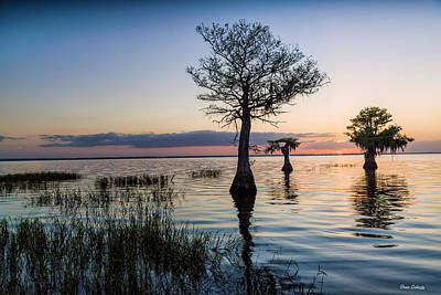 Photograph - Dawn At Blue Cypress Lake by Fran Gallogly
