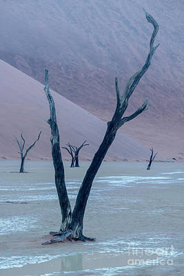 Photograph - Dawn At Deadvlei - Namibia by Sandra Bronstein