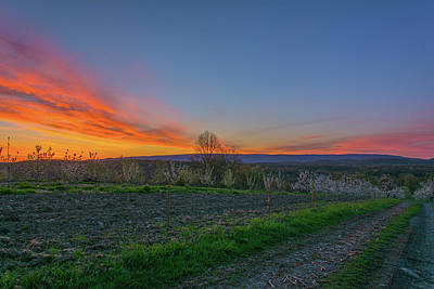 Dawn At Roe Orchards I Art Print by Angelo Marcialis