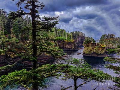 Parks Photograph - Dawn Cape Flattery Trail Washington by Timothy Kleszczewski