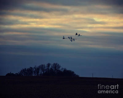 Photograph - Dawn Flight by Kathy M Krause