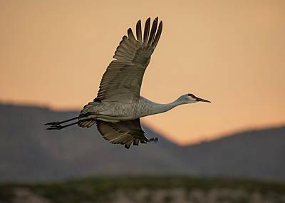 Photograph - Dawn Flight by Loree Johnson