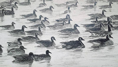 Duck Water Pencil Drawing - Dawn Flock by Ann Casey