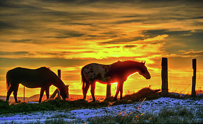 Photograph - Dawn Horses by Fiskr Larsen