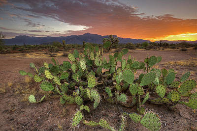 Photograph - Dawn In The Desert by Sue Cullumber