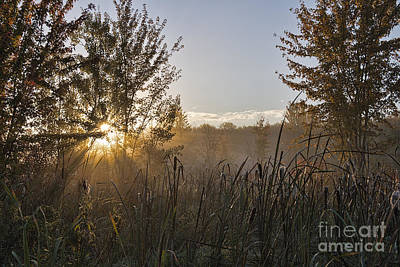 Photograph - Dawn In The Reeds by David Arment