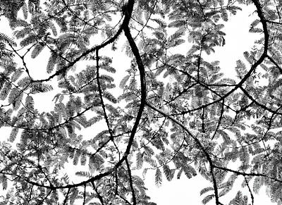 Leaves Changing Photograph - Dawn Redwood Foliage Monochrome by Tim Gainey