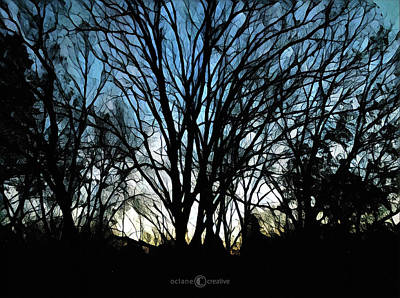 Photograph - Dawn Through The Trees by Tim Nyberg