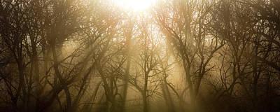 Photograph - Dawning by Ryan Heffron