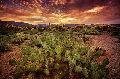 Photograph - Dawn's First Light On The Sonoran by Saija Lehtonen