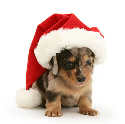 Photograph - Daxie Santa by Warren Photographic