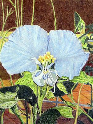 Fuqua - Artwork Drawing - Day Flower by Beverly Fuqua