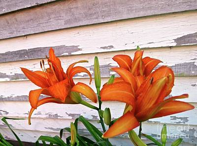 Photograph - Day Lilies And Peeling Paint by Nancy Patterson