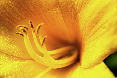 Photograph - Day Lilly Blossom Macro by Barry Jones