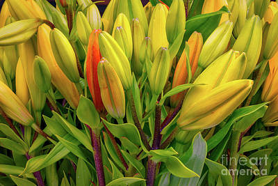 Photograph - Day Lily Buds by Jerry Fornarotto