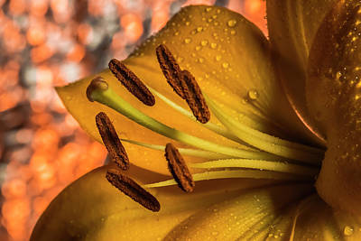Day Lilly Photograph - Day Lily Close Up With Abstract Background by Sven Brogren