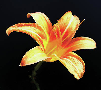 Photograph - Day Lily In Degas Style Orange by Denise Beverly