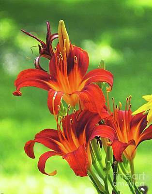 Photograph - Day Lily by Lizi Beard-Ward