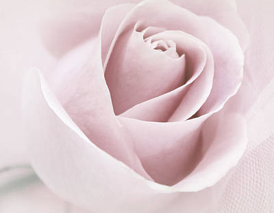 Lovely Lavender - Day of Rose by The Art Of Marilyn Ridoutt-Greene