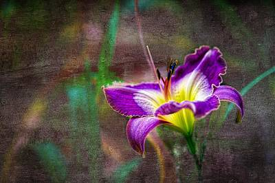 Photograph - Day Of The Lily by Ches Black