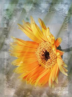 Photograph - Day Spring Daisy by Ella Kaye Dickey
