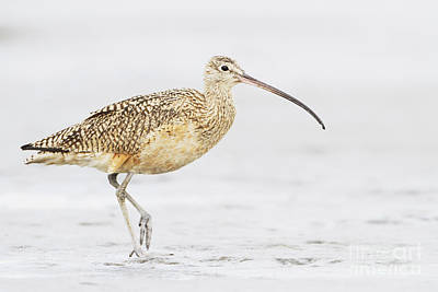 Lake Life - Day with a Curlew by Ruth Jolly
