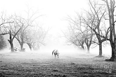 Arkansas Photograph - Daybreak - Bw by Scott Pellegrin