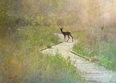 Digital Art - Daydream Deer by Liz Alderdice
