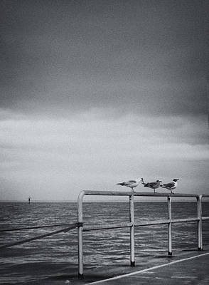 Photograph - Daydream In Gray 3 by Lynne Mitchell