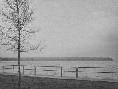 Photograph - Daydream In Gray 4 by Lynne Mitchell