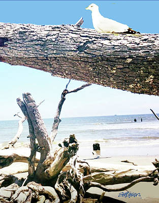 Photograph - Daydreams And Driftwood by Seth Weaver