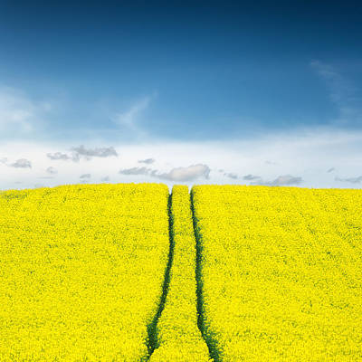 Yellow Photograph - Daydreams by Ian David Soar