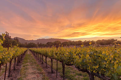 Photograph - Day-end In The Wine Country by Jonathan Nguyen