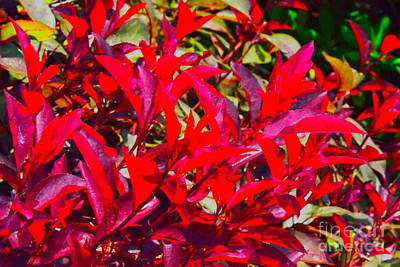 Photograph - Dayglo Flora by Jesse Ciazza