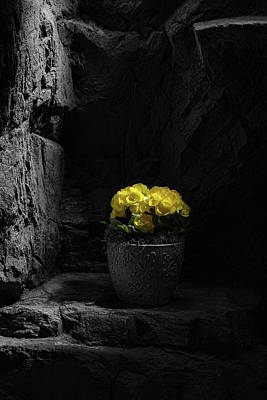 Flowerpots Photograph - Daylight Delight by Tom Mc Nemar