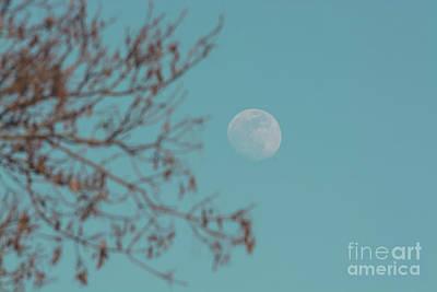 Photograph - Daylight Moon by Cheryl Baxter