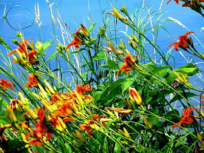 Photograph - Daylilies At Sheldon Marsh by Beth Akerman
