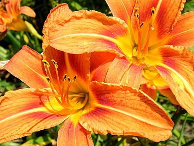 Daylillies In Bloom Art Print by Margaret G Calenda
