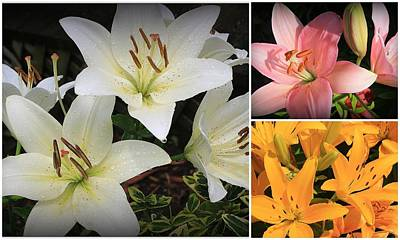 Photograph - Daylily Beauty - A Collage by Dora Sofia Caputo Photographic Design and Fine Art