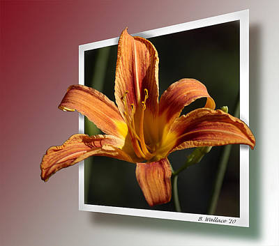Out Of Bounds Photograph - Daylily by Brian Wallace
