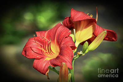 Photograph - Daylily Closer by Teresa Zieba